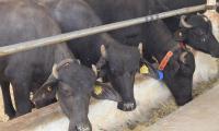 Animal Tagging